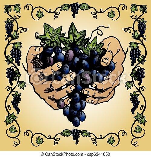 grape-vineyard-drawing