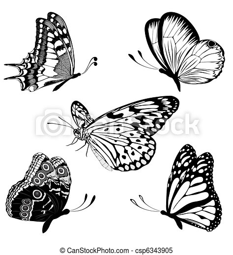 Set black white butterflies of a ta - csp6343905