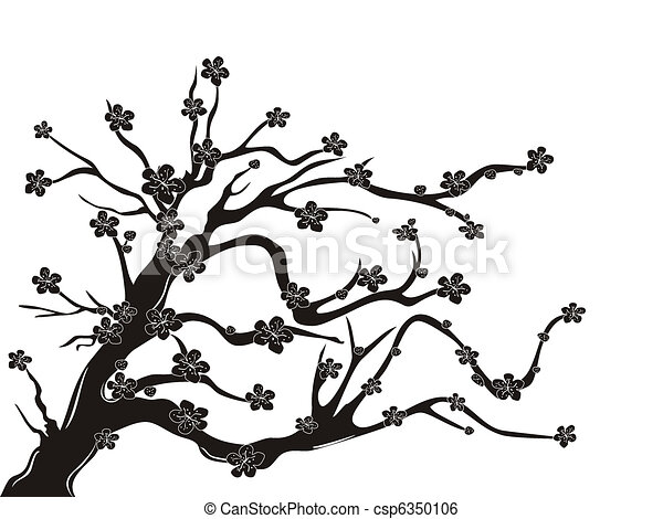cherry blossom tree silhouette - csp6350106