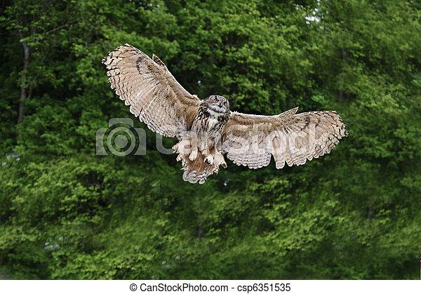 Stunning European eagle owl in flight - csp6351535