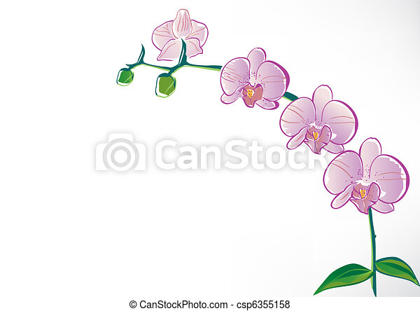 Stylized orchid - csp6355158