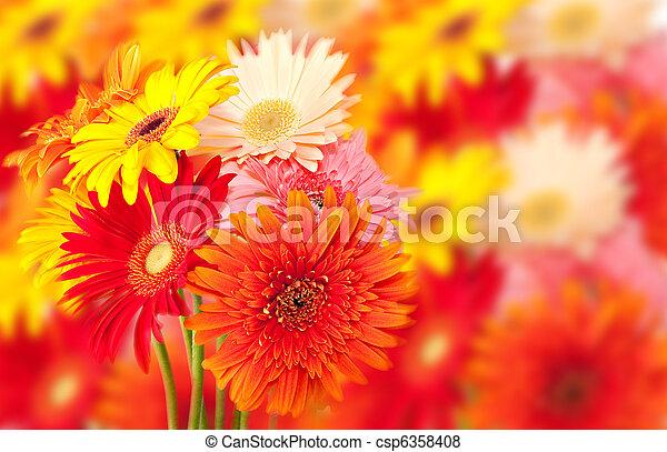 gerbera daisy bunch - csp6358408