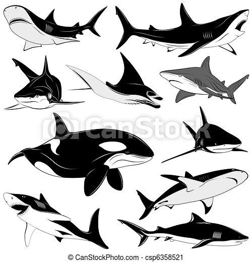 Set of various sharks, tattoo - csp6358521