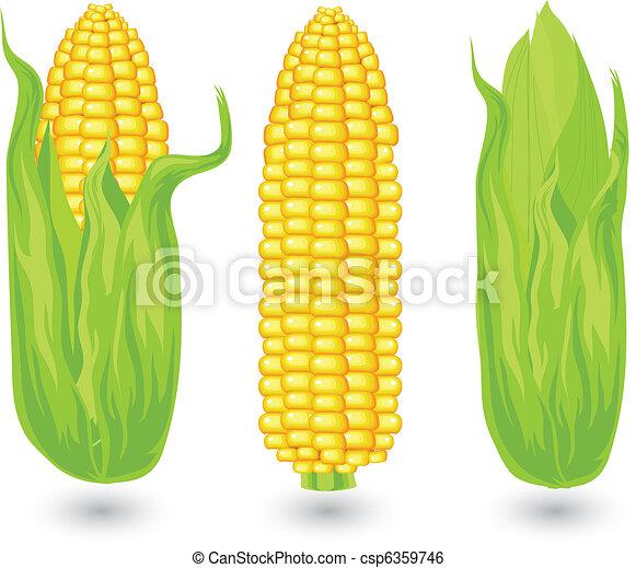 Ears of ripe corn - csp6359746