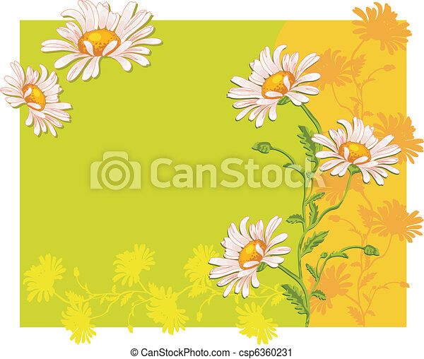Ox-eye daisys - csp6360231