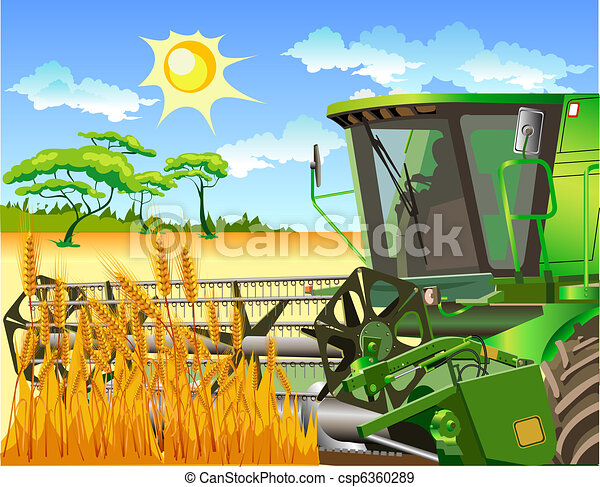 Field of wheat and combine - csp6360289