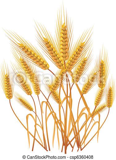Ears of wheat - csp6360408