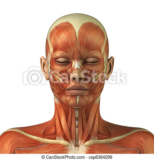 Anatomy of female head muscular system - csp6364299
