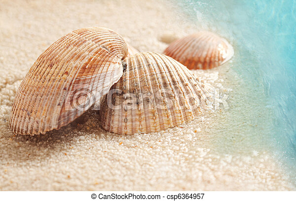 Seashells in the wet sand - csp6364957