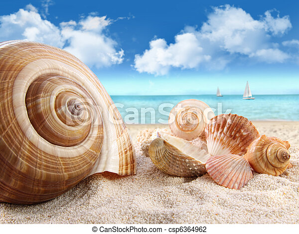 Seashells on the beach - csp6364962