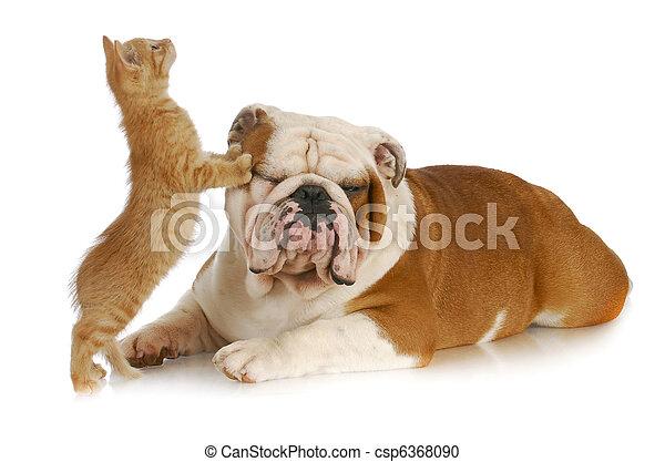 cat and dog - csp6368090