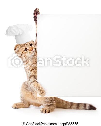 funny kitten in cook hat holding menu blank - csp6368885