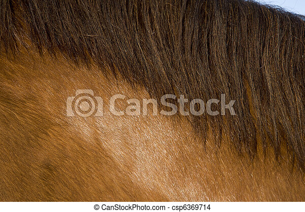 The neck of a horse with mane - csp6369714