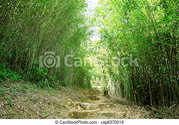 Green Bamboo Forest -- a path leads through a lush bamboo forest in Taiwan - csp6370019