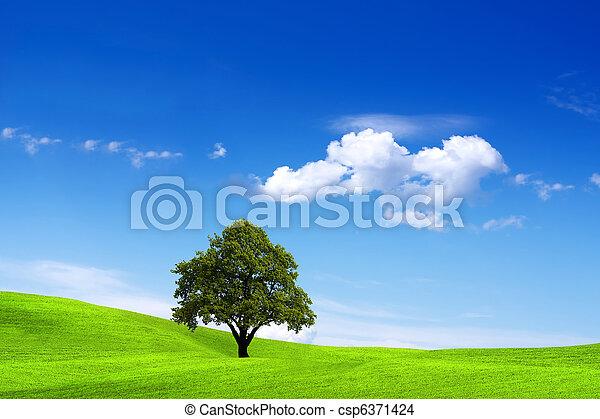 Clean Environment - csp6371424