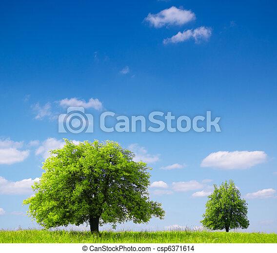 Ecosystem - csp6371614