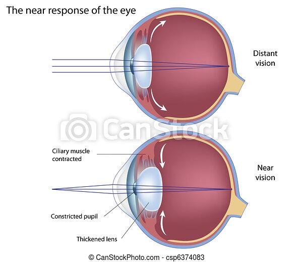 The near response of the eye, eps8 - csp6374083