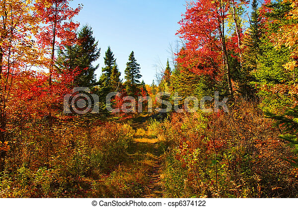 Beautiful autumn day in the woods - csp6374122
