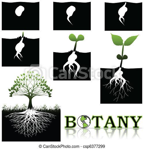 Botany - csp6377299