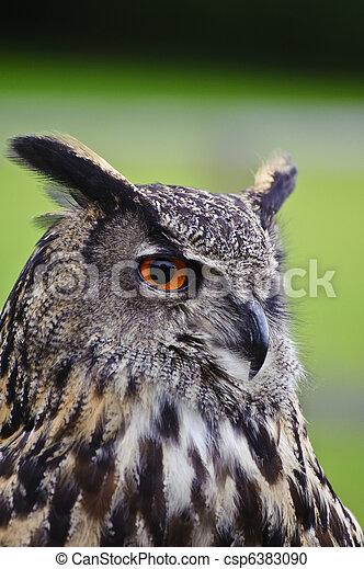 Stunning European eagle owl in flight - csp6383090