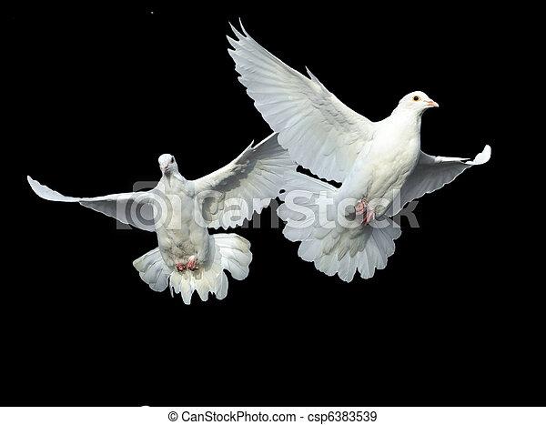 white dove in free flight - csp6383539