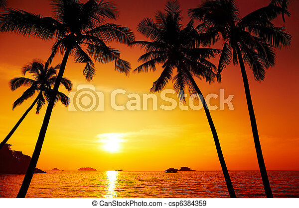 Palm trees silhouette at sunset - csp6384359