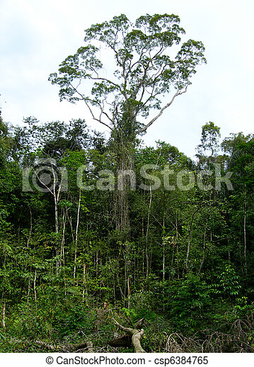 Rain forest in the Amazon