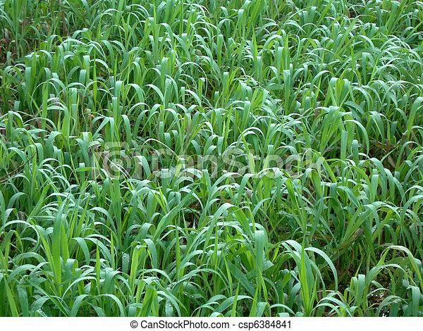 Greenery background           - csp6384841