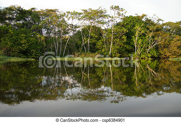 Amazon River rainforest - csp6384901