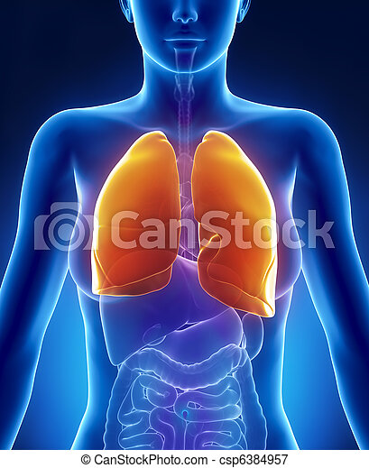 Female lungs anatomy anterior view - csp6384957