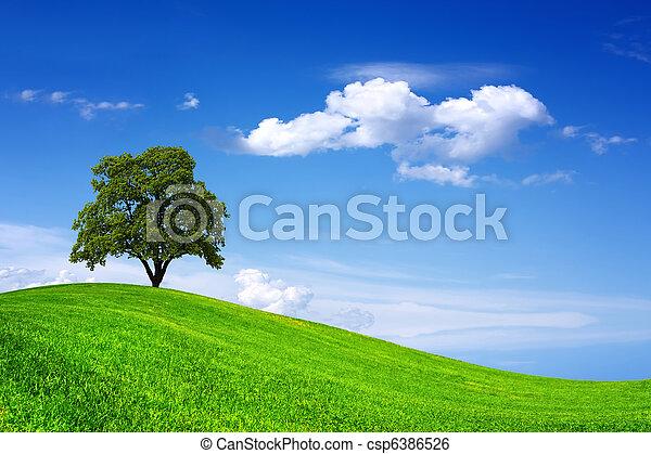 Beautiful oak tree on green field - csp6386526