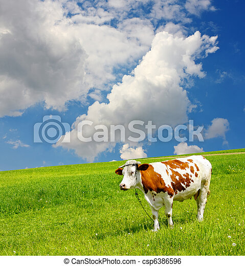 Cow and the ecological environment - csp6386596