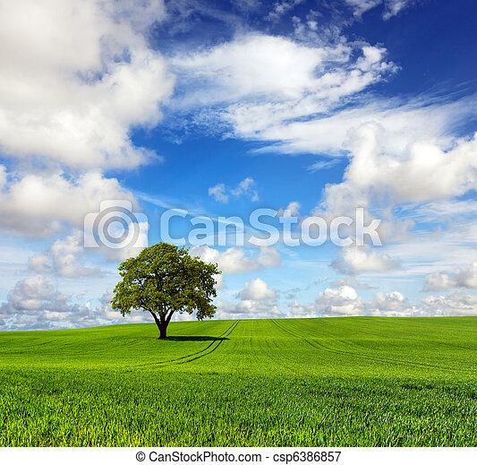 The mighty oak - csp6386857