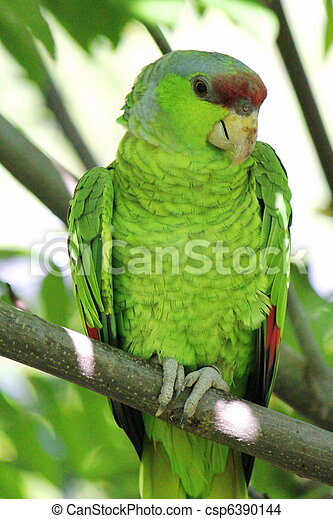 Military green parrot standing on a branch - csp6390144