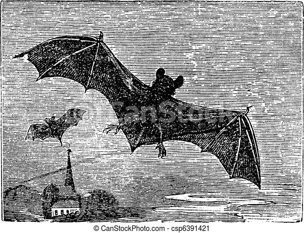 Common Bat vintage engraving - csp6391421