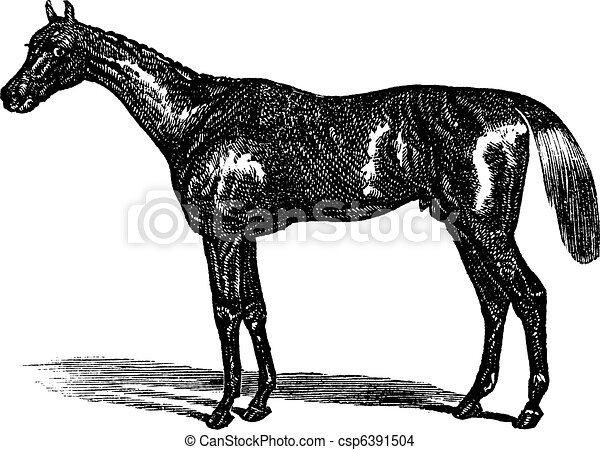 Thoroughbred vintage engraving - csp6391504