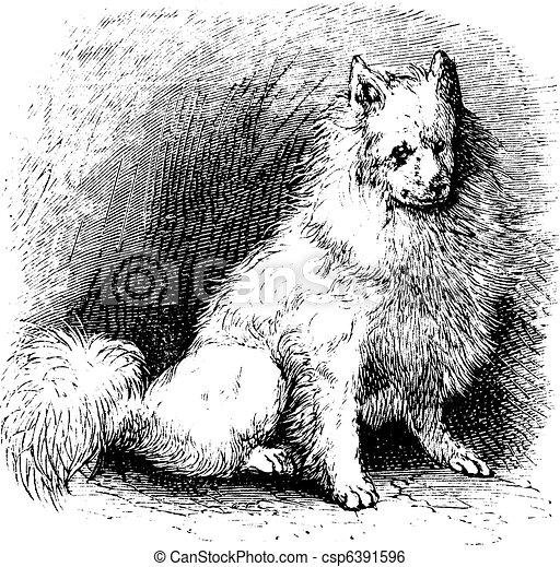 Husky vintage engraving - csp6391596