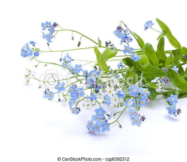 bello, fiori blu - csp6392312