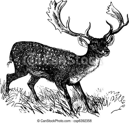 Fallow Deer or Dama dama, vintage engraving - csp6392358