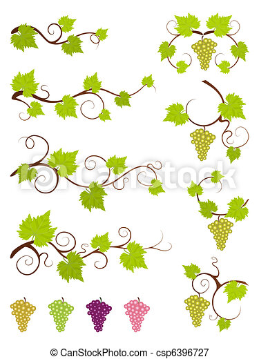 Grape vines design elements set. - csp6396727