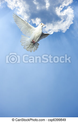 white dove in free flight - csp6399849