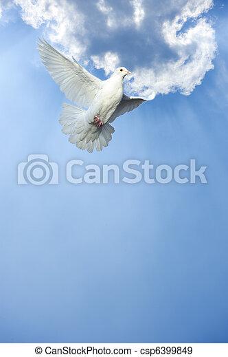 white dove in free flight - csp6399849