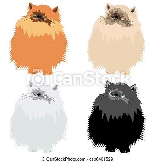 four persian cats on white  - csp6401529