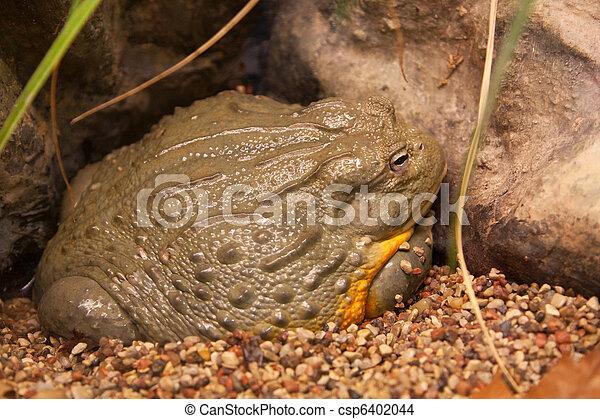 Frog reptile - csp6402044