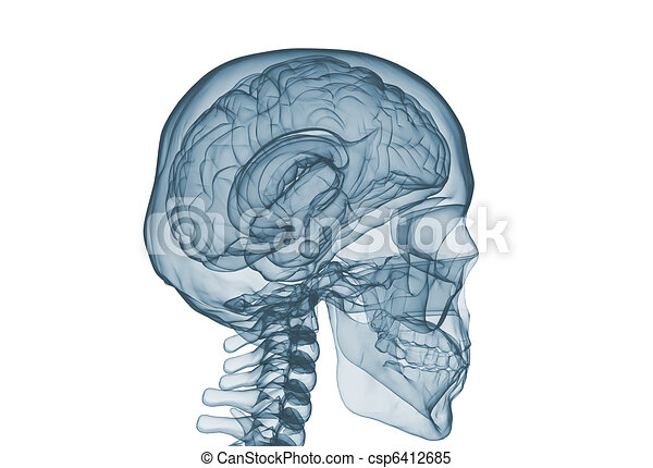 Brain and skull x ray image isolated on white  - csp6412685