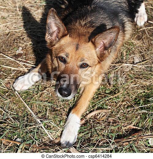 Loyal Dog With Beseeching Eyes - csp6414284