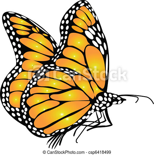Monarch Butterfly  - csp6418499