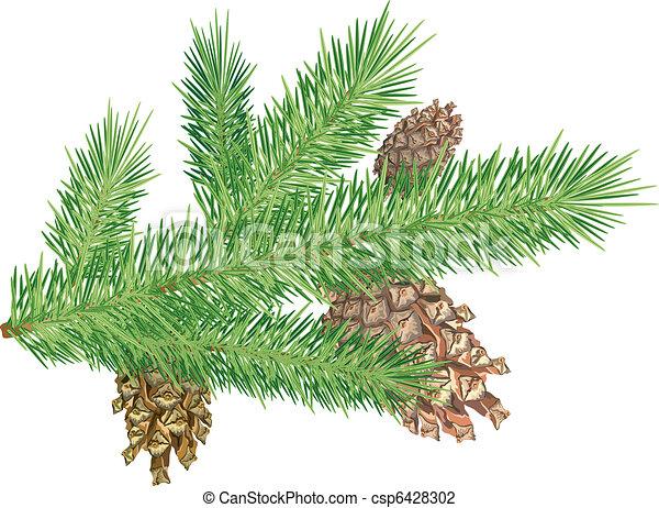 Cones on branch - csp6428302