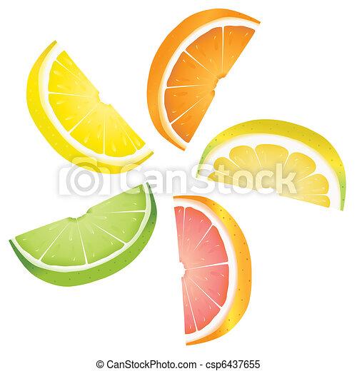 Citrus slices - csp6437655