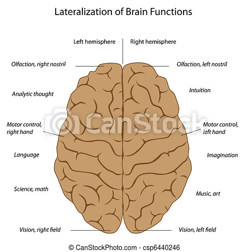 Brain functions, eps8 - csp6440246